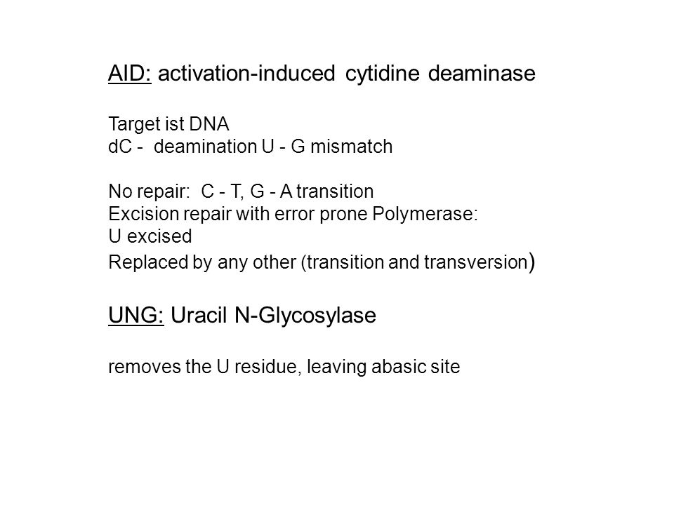 AID: activation-induced cytidine deaminase