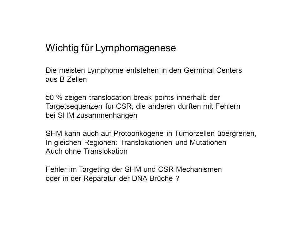 Wichtig für Lymphomagenese