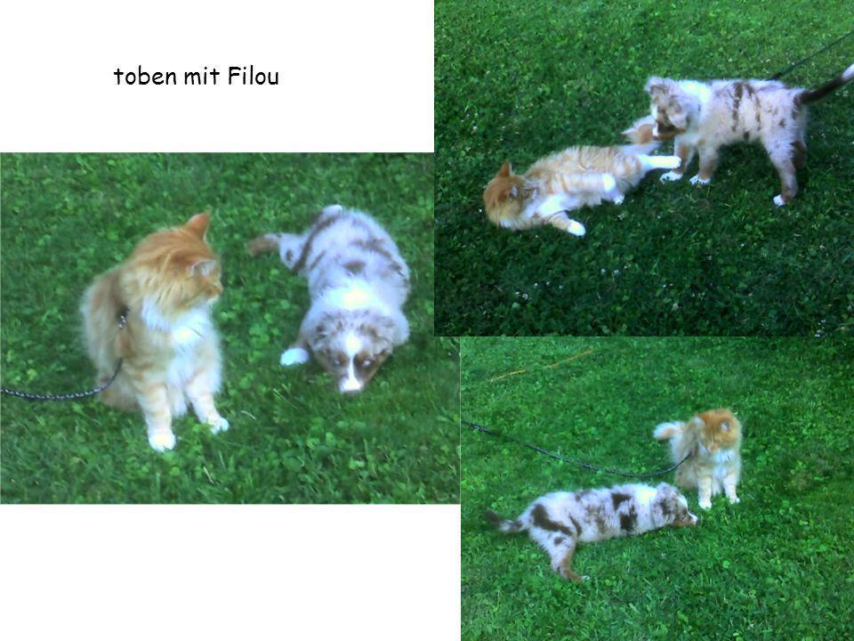 toben mit Filou