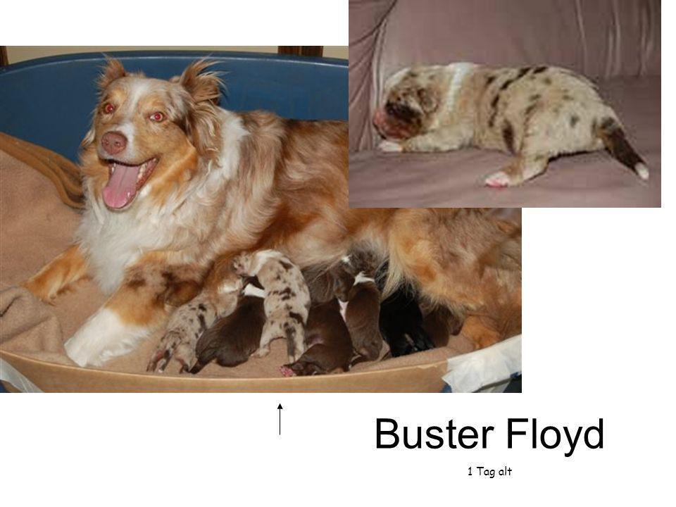 Buster Floyd 1 Tag alt
