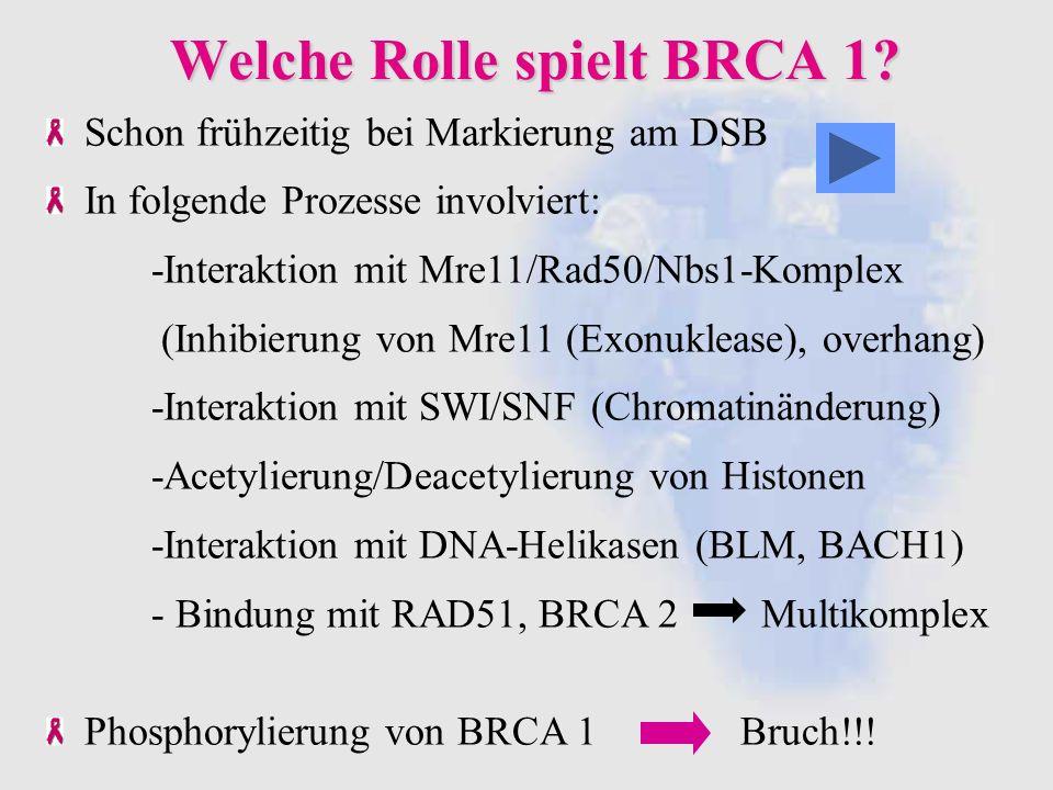 Welche Rolle spielt BRCA 1