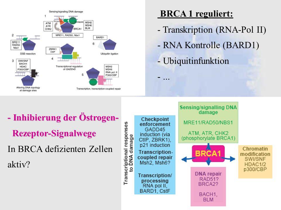 BRCA 1 reguliert: - Transkription (RNA-Pol II) - RNA Kontrolle (BARD1)