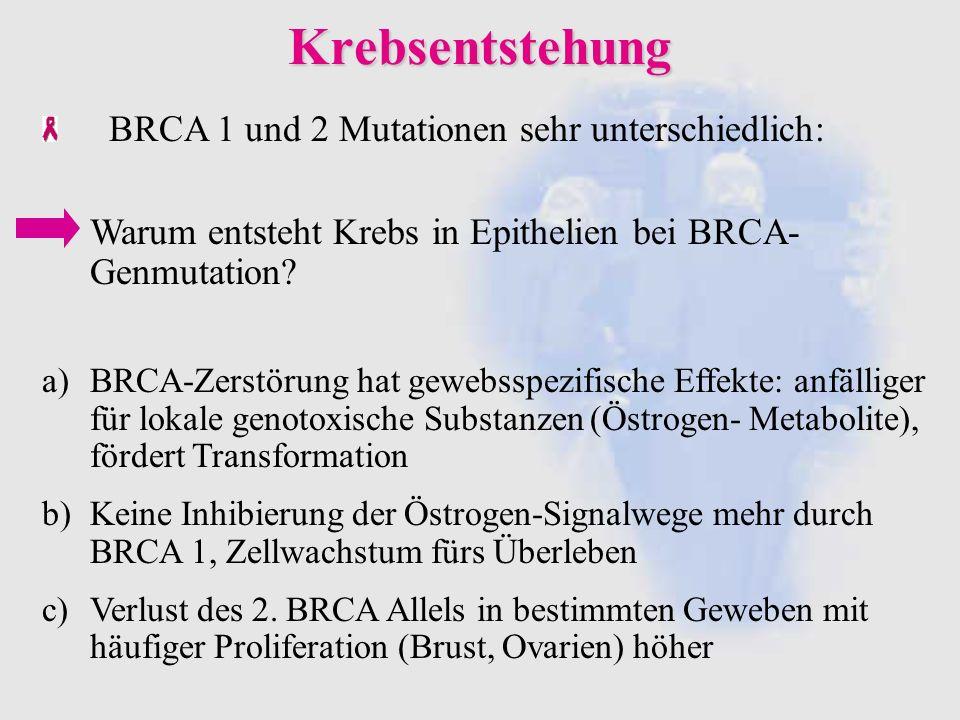 Krebsentstehung BRCA 1 und 2 Mutationen sehr unterschiedlich: