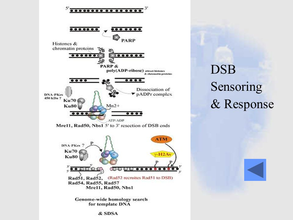 DSB Sensoring & Response