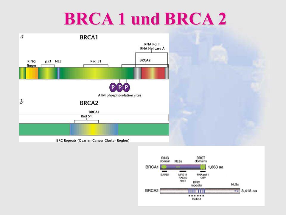 BRCA 1 und BRCA 2