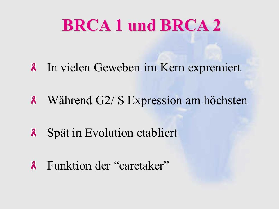 BRCA 1 und BRCA 2 In vielen Geweben im Kern expremiert