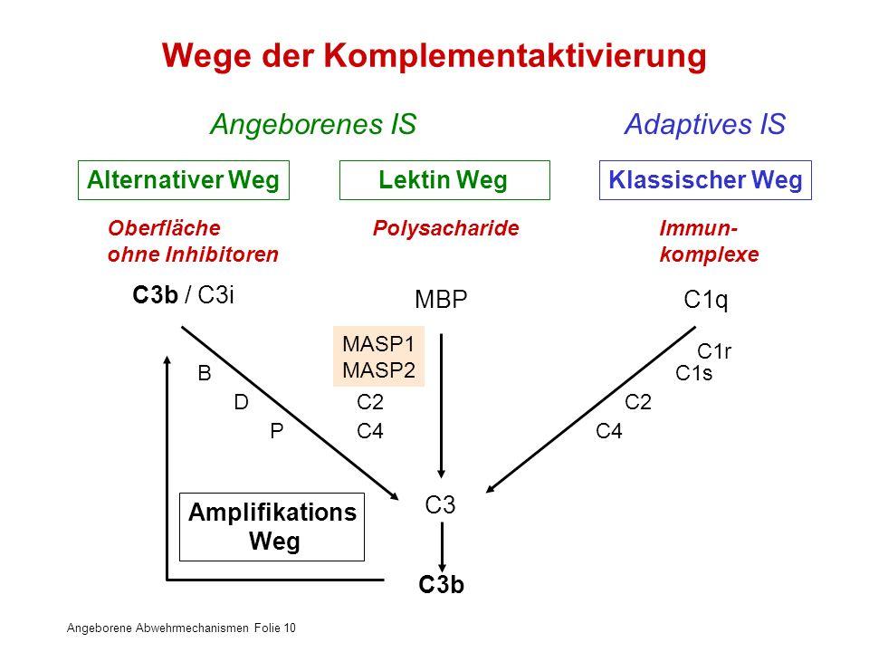 Wege der Komplementaktivierung