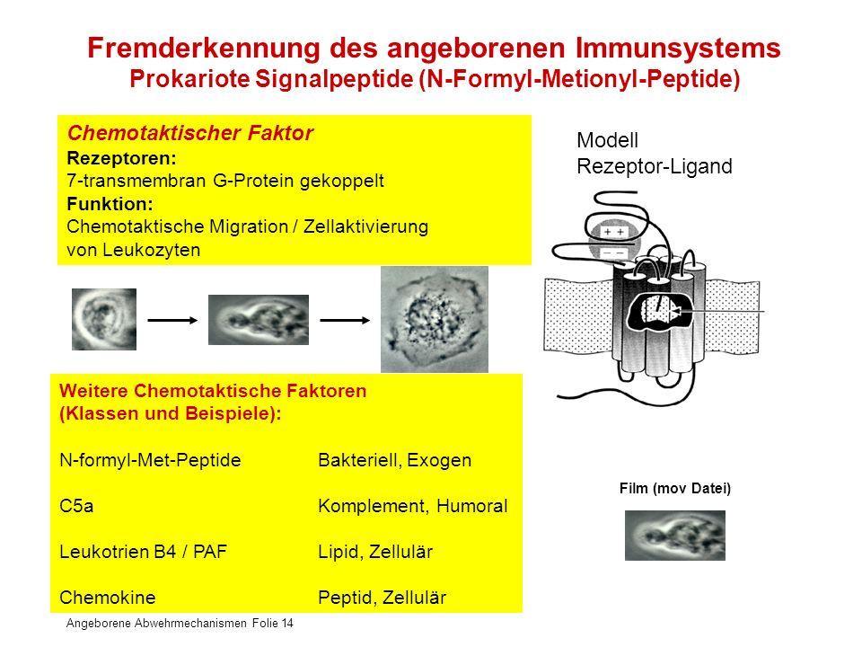 Fremderkennung des angeborenen Immunsystems Prokariote Signalpeptide (N-Formyl-Metionyl-Peptide)