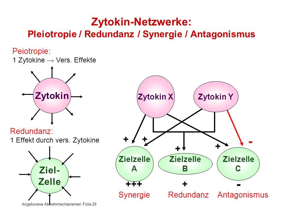 Zytokin-Netzwerke: Pleiotropie / Redundanz / Synergie / Antagonismus