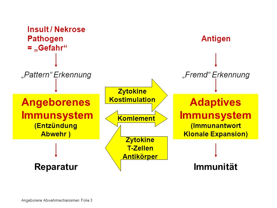 Angeborenes – Adaptives Immunsystem