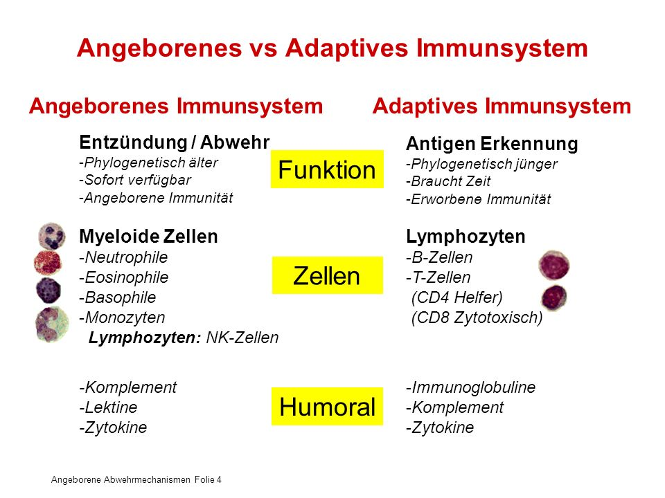 Angeborenes vs Adaptives Immunsystem