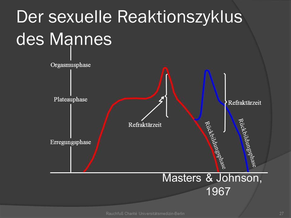 Der sexuelle Reaktionszyklus des Mannes
