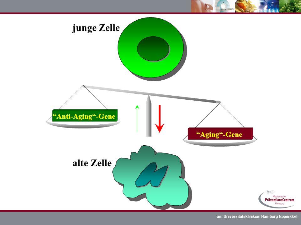 junge Zelle alte Zelle Anti-Aging -Gene Aging -Gene