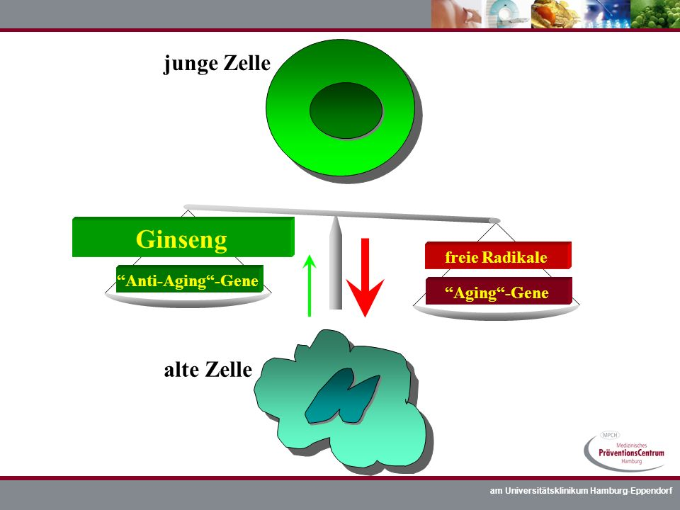 Ginseng junge Zelle alte Zelle freie Radikale Anti-Aging -Gene