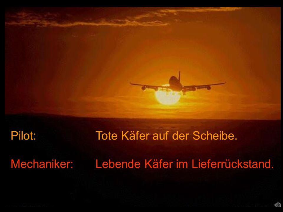 Pilot: Tote Käfer auf der Scheibe.