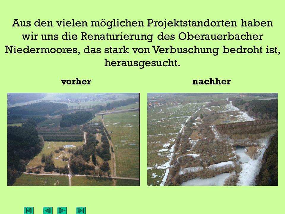 Aus den vielen möglichen Projektstandorten haben wir uns die Renaturierung des Oberauerbacher Niedermoores, das stark von Verbuschung bedroht ist, herausgesucht.