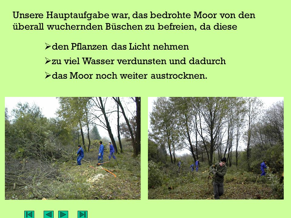 Unsere Hauptaufgabe war, das bedrohte Moor von den überall wuchernden Büschen zu befreien, da diese