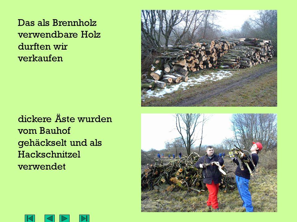 Das als Brennholz verwendbare Holz durften wir verkaufen