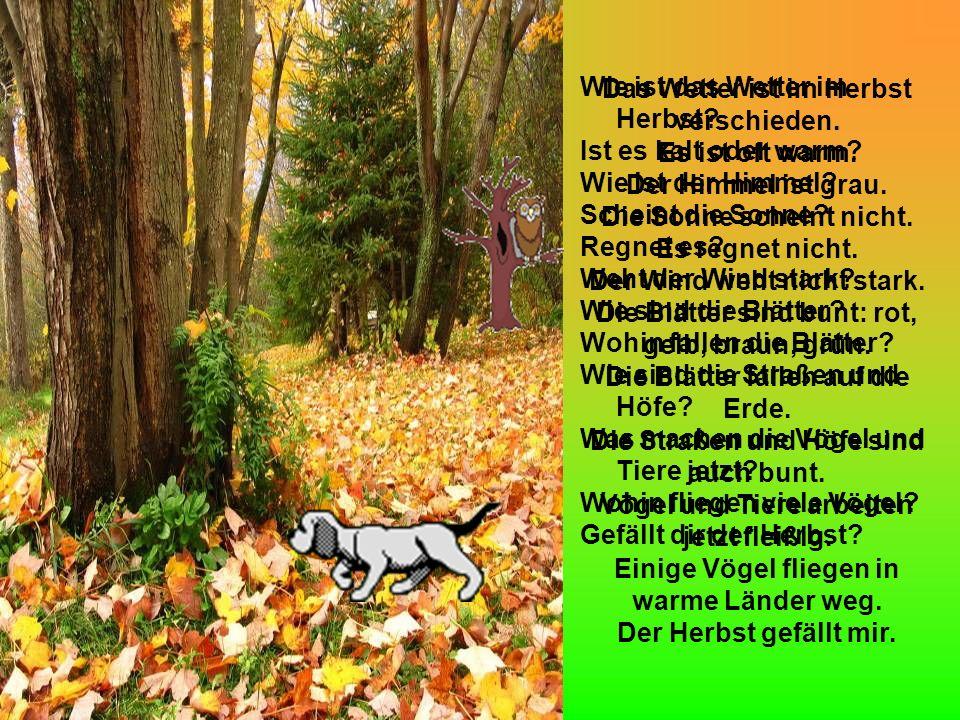 Das Wetter ist im Herbst verschieden. Es ist oft warm.