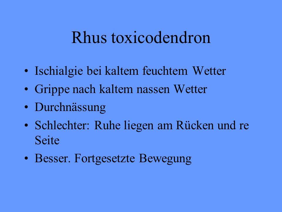 Rhus toxicodendron Ischialgie bei kaltem feuchtem Wetter