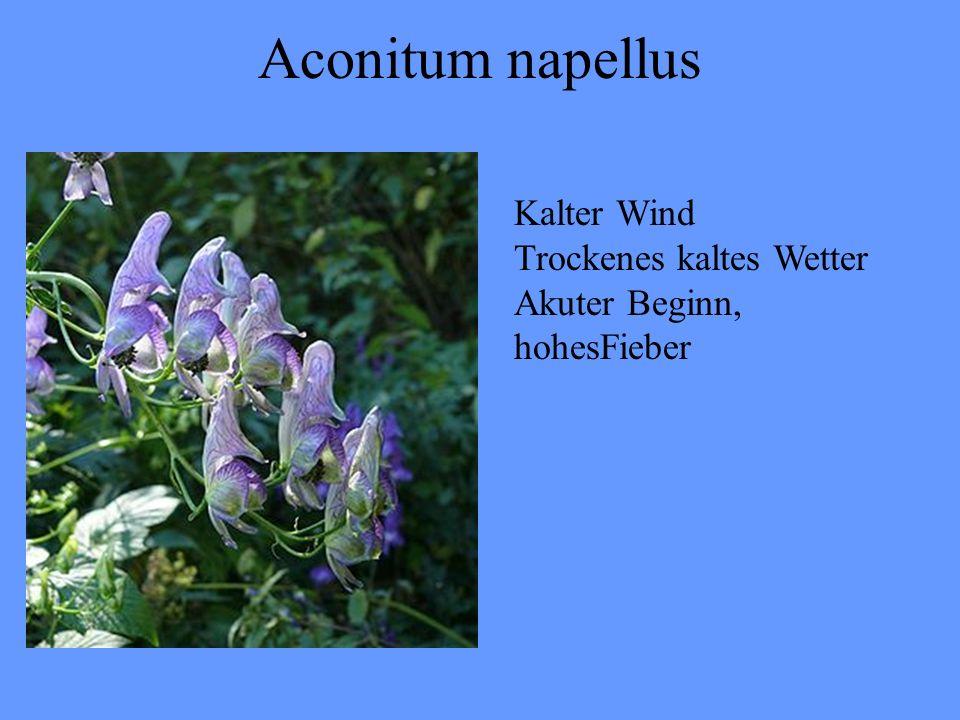 Aconitum napellus Kalter Wind Trockenes kaltes Wetter