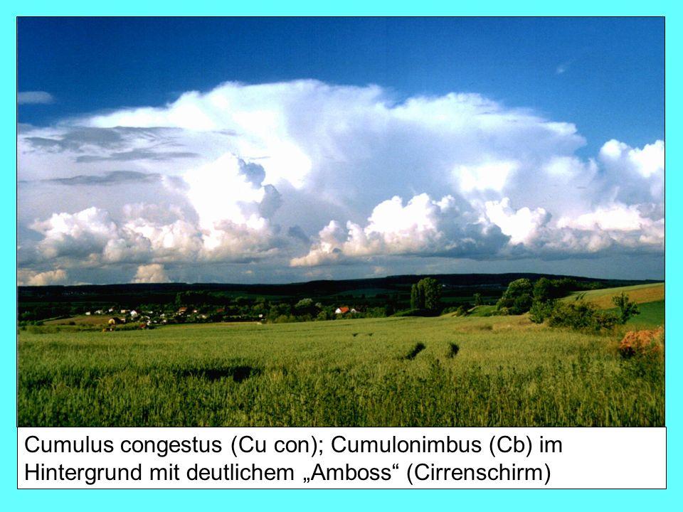 """Cumulus congestus (Cu con); Cumulonimbus (Cb) im Hintergrund mit deutlichem """"Amboss (Cirrenschirm)"""