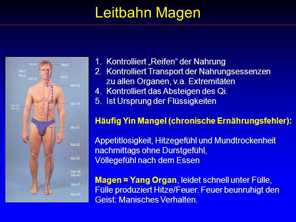 "Leitbahn Magen 1. Kontrolliert ""Reifen der Nahrung"