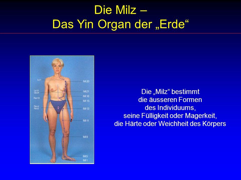 """Die Milz – Das Yin Organ der """"Erde"""