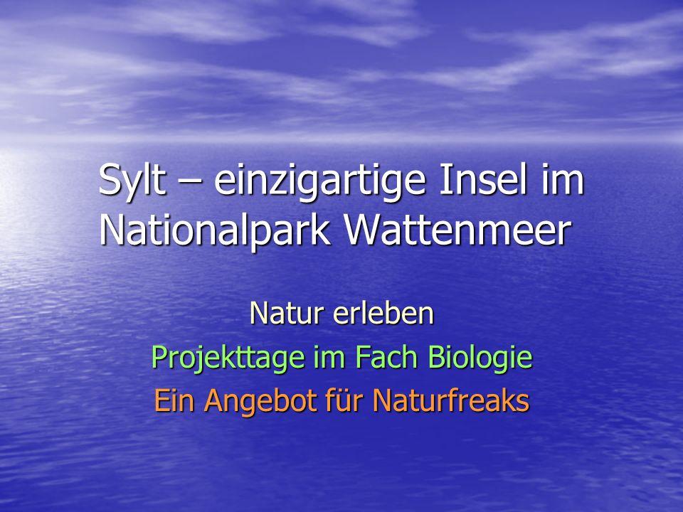 Sylt – einzigartige Insel im Nationalpark Wattenmeer