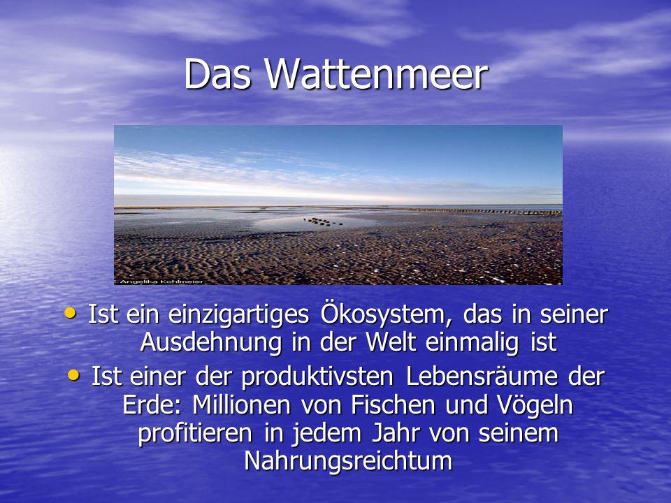 Das Wattenmeer Ist ein einzigartiges Ökosystem, das in seiner Ausdehnung in der Welt einmalig ist.