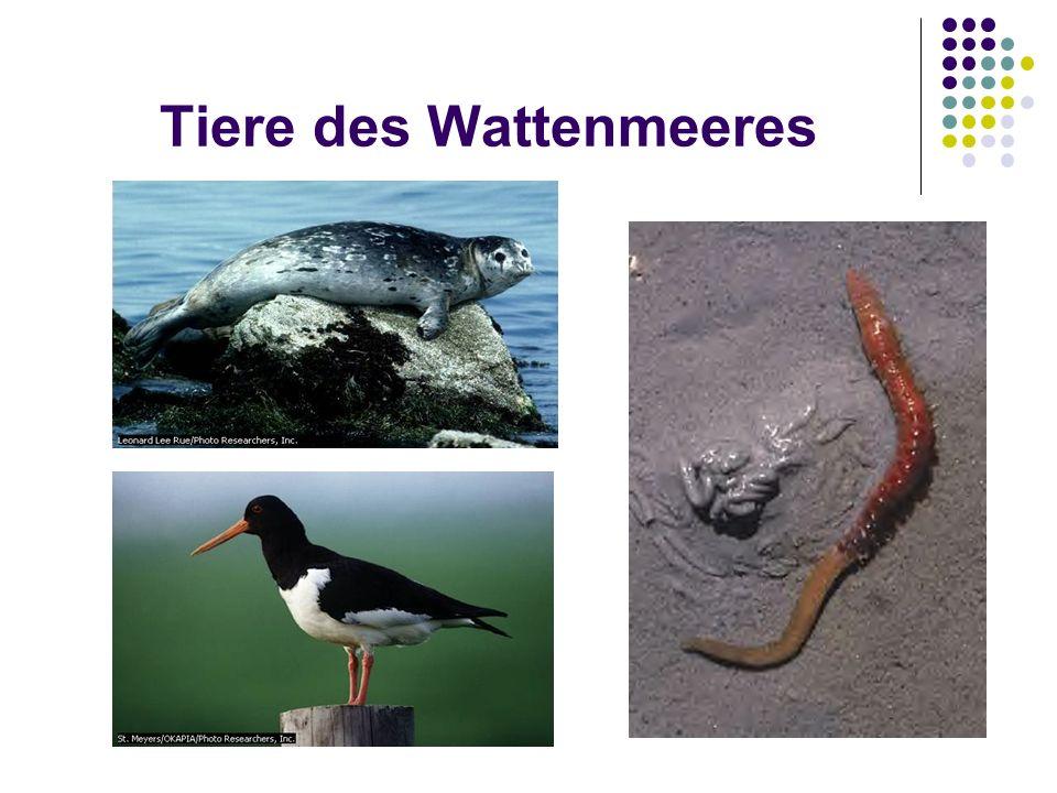 Tiere des Wattenmeeres