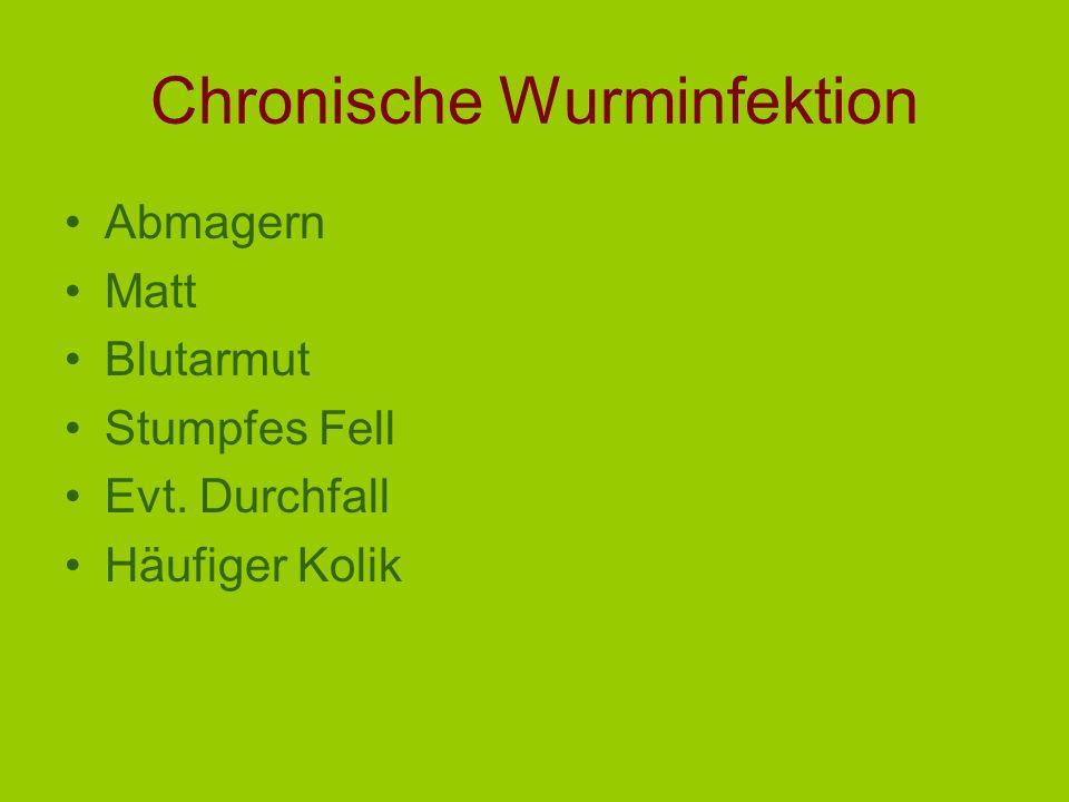 Chronische Wurminfektion