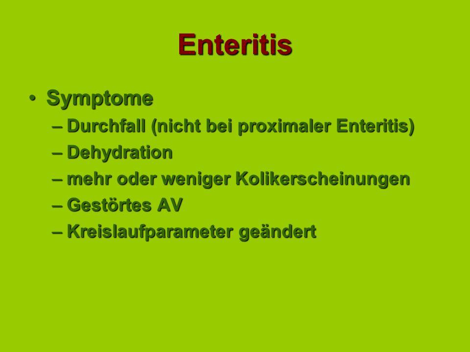 Enteritis Symptome Durchfall (nicht bei proximaler Enteritis)