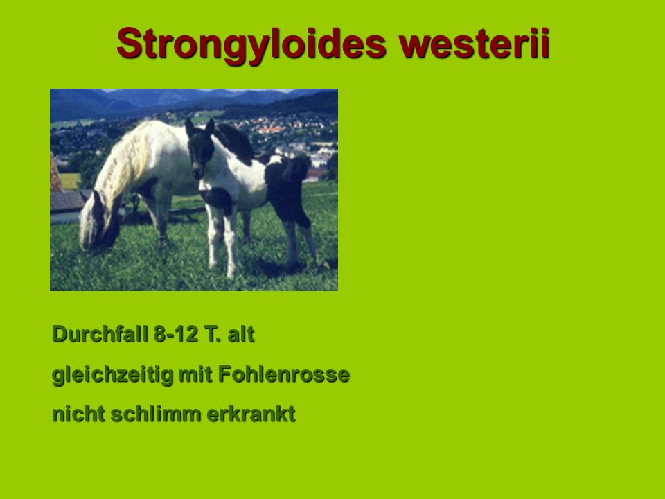 Strongyloides westerii