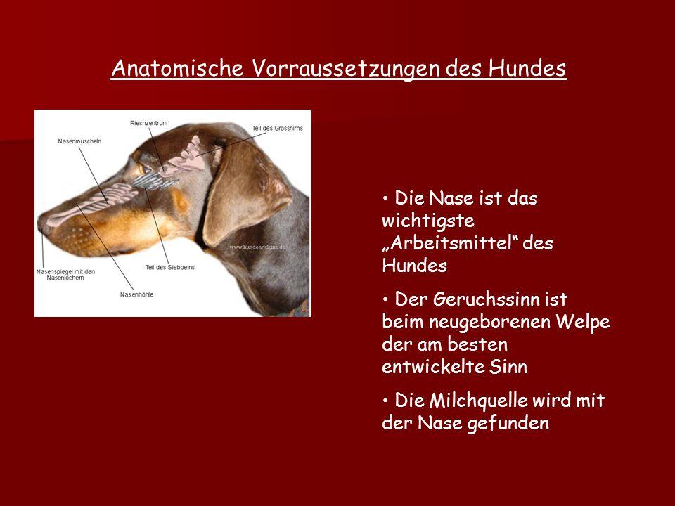 Anatomische Vorraussetzungen des Hundes
