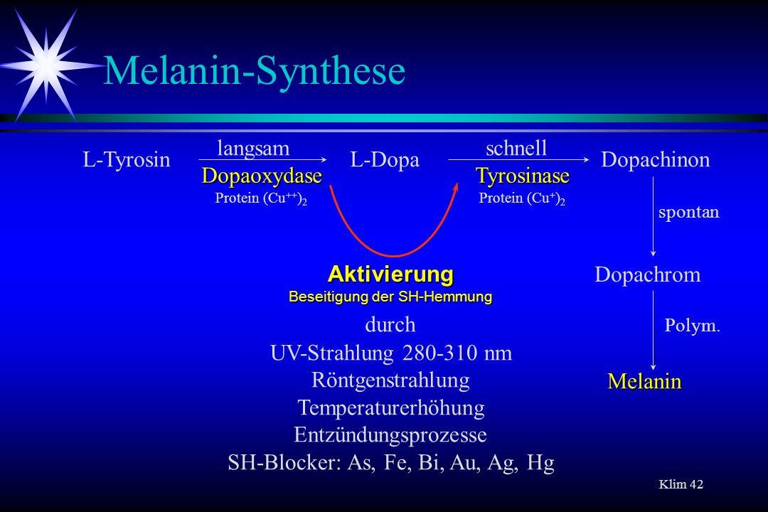 Melanin-Synthese langsam schnell L-Tyrosin L-Dopa Dopachinon