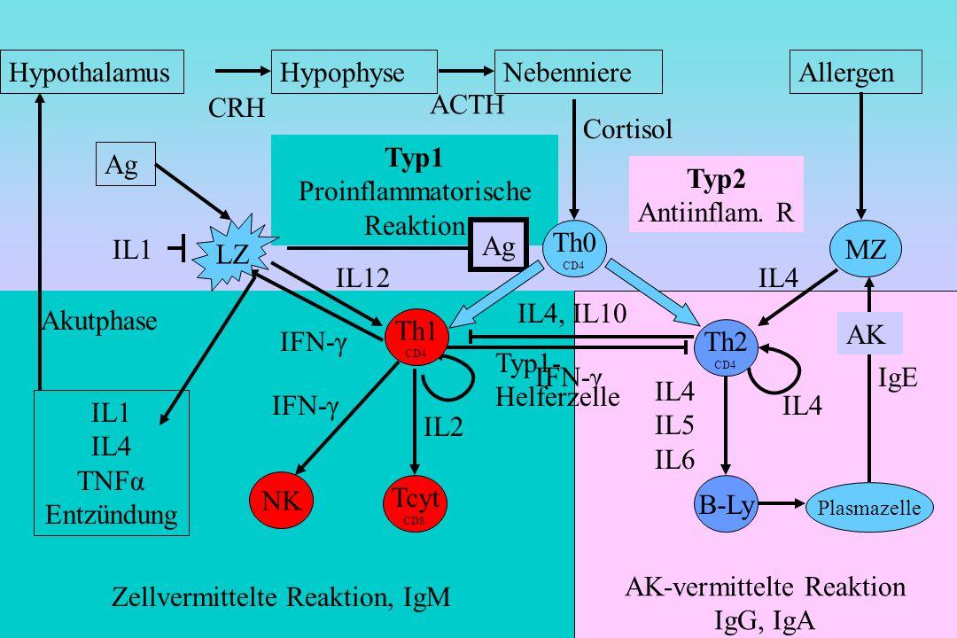 Zellvermittelte Reaktion, IgM Typ1 Proinflammatorische Reaktion Ag