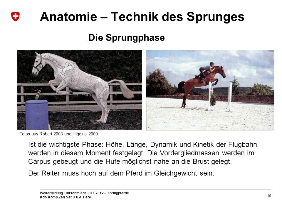 Anatomie – Technik des Sprunges