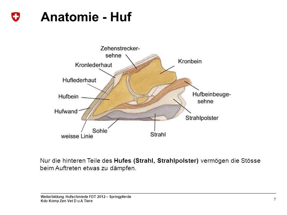 Anatomie - Huf Nur die hinteren Teile des Hufes (Strahl, Strahlpolster) vermögen die Stösse beim Auftreten etwas zu dämpfen.