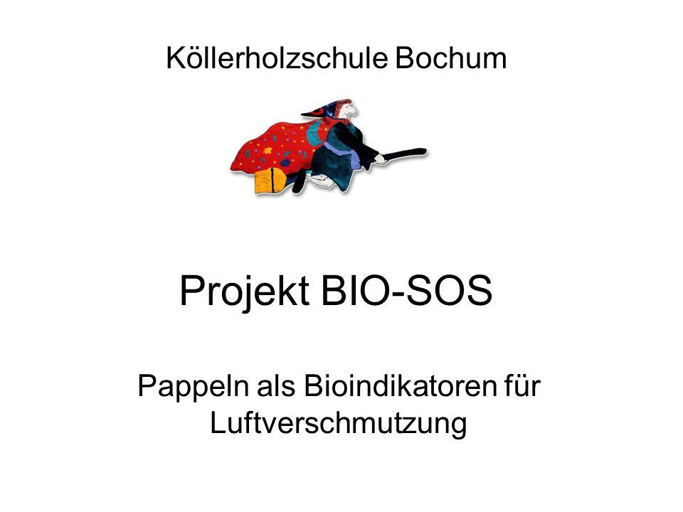 Pappeln als Bioindikatoren für Luftverschmutzung