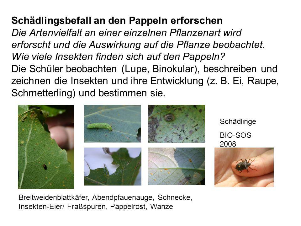 Schädlingsbefall an den Pappeln erforschen Die Artenvielfalt an einer einzelnen Pflanzenart wird erforscht und die Auswirkung auf die Pflanze beobachtet. Wie viele Insekten finden sich auf den Pappeln Die Schüler beobachten (Lupe, Binokular), beschreiben und zeichnen die Insekten und ihre Entwicklung (z. B. Ei, Raupe, Schmetterling) und bestimmen sie.
