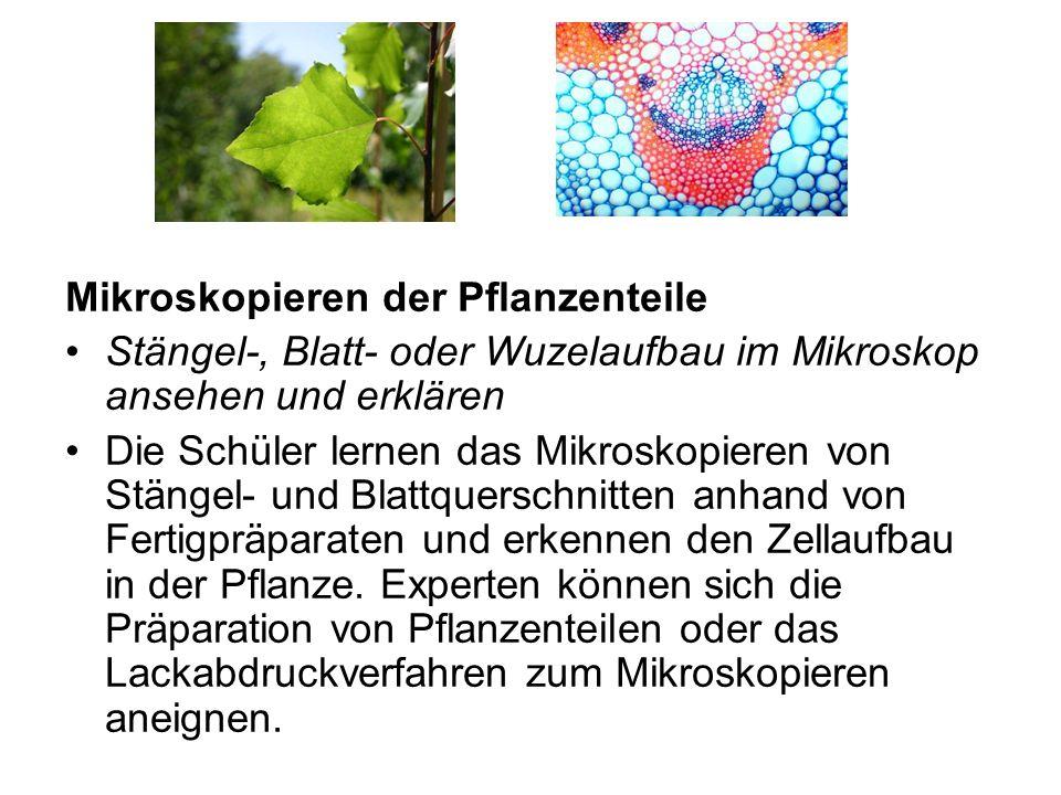 Mikroskopieren der Pflanzenteile