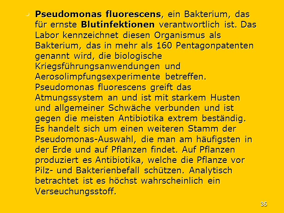 Pseudomonas fluorescens, ein Bakterium, das für ernste Blutinfektionen verantwortlich ist.