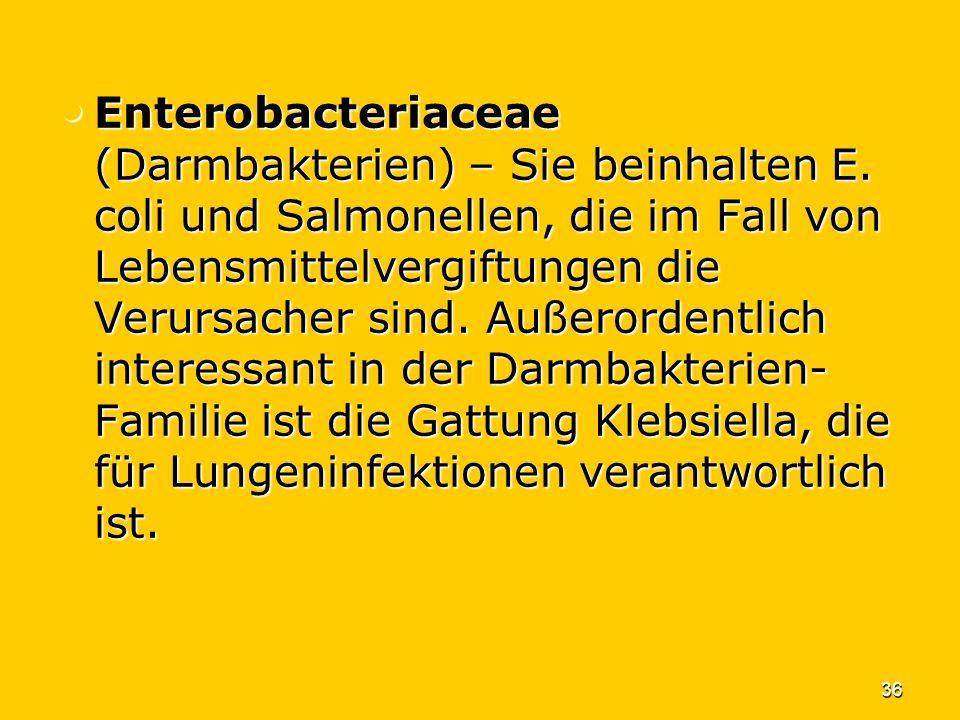 Enterobacteriaceae (Darmbakterien) – Sie beinhalten E