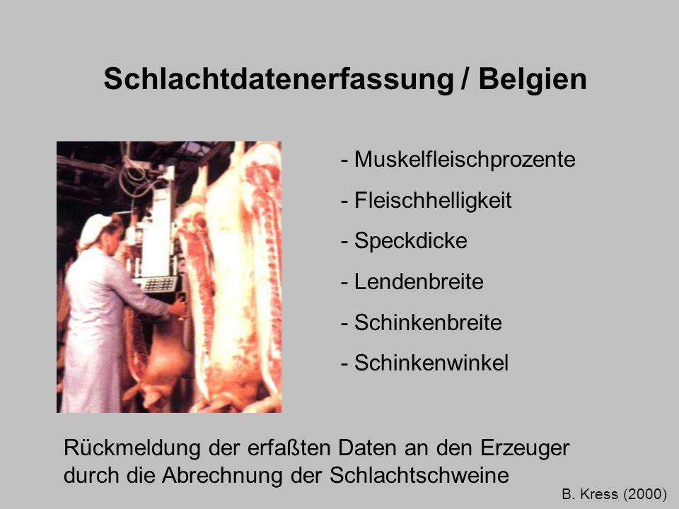 Schlachtdatenerfassung / Belgien