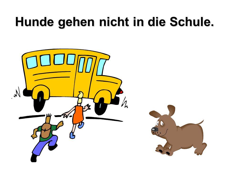 Hunde gehen nicht in die Schule.