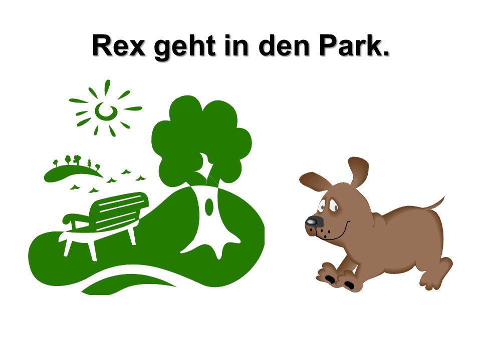 Rex geht in den Park.