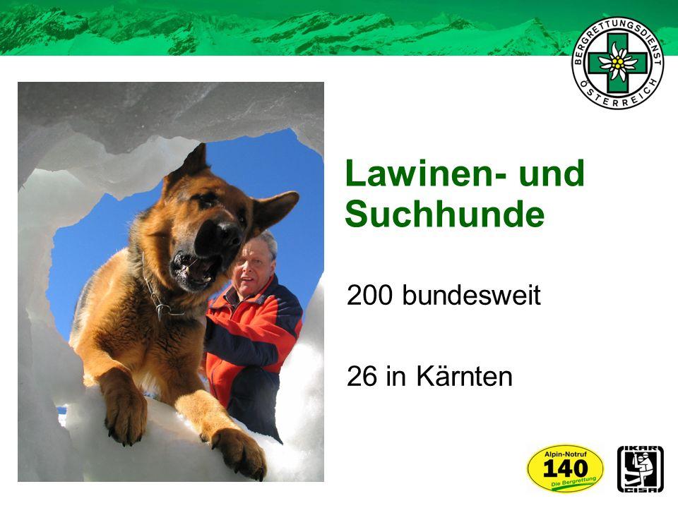 Lawinen- und Suchhunde