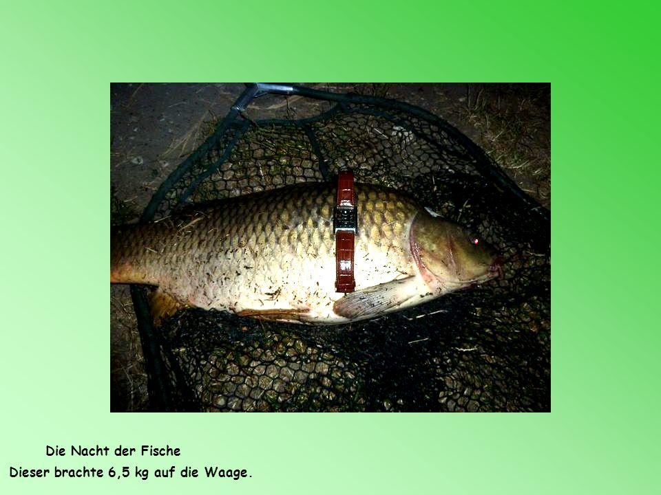 Die Nacht der Fische Dieser brachte 6,5 kg auf die Waage.