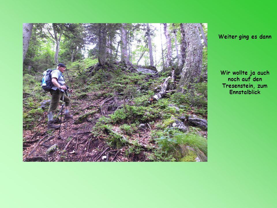 Wir wollte ja auch noch auf den Tresenstein, zum Ennstalblick
